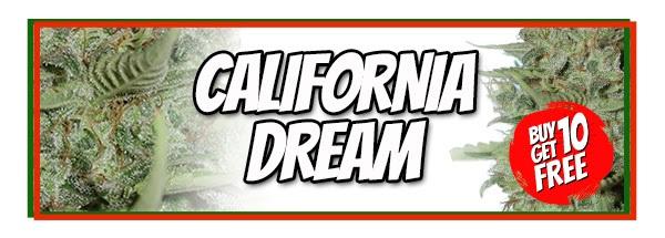 California Dream Cannabis Seeds Sale