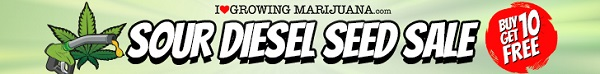 Free Marijuana Seeds Sour Diesel Sale