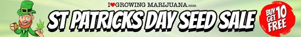 Free Marijuana Seeds St Patricks Day Sale