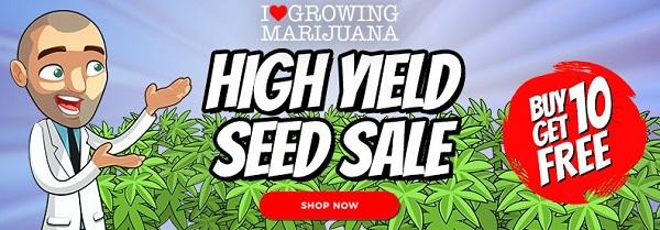 High Yield Marijuana Seeds Sale