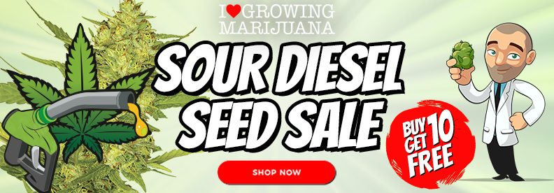 Sour Diesel Marijuana Seeds Offer