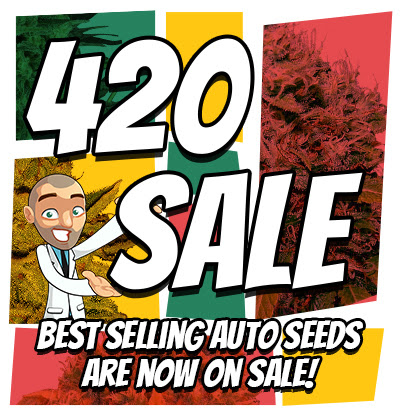 420 Deals On Autoflowering Strains