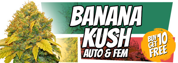 Banana Kush Seeds 420 Offer