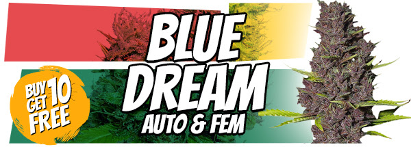 Blue Dream Seeds 420 Offer