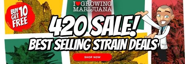 Feminized Marijuana Seeds 420 Offer