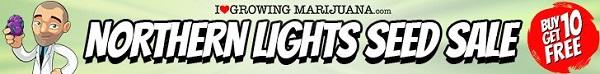 Free Marijuana Seeds Northern Lights Sale