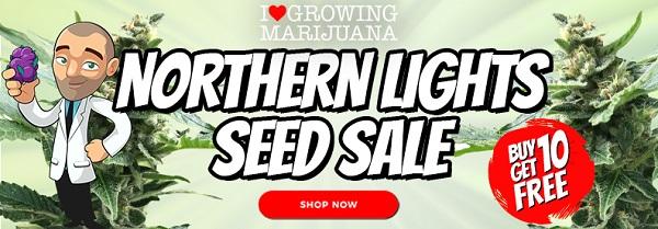 Northern Lights Marijuana Seeds Offer