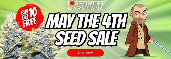 Buy Discounted Strains And Receive 10 Free Seeds