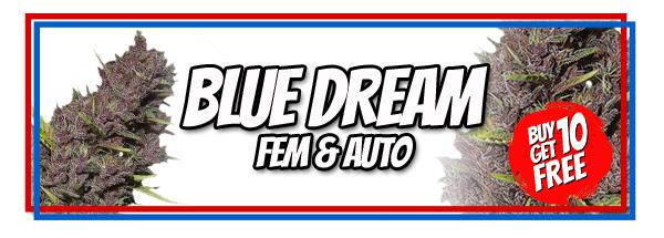 Blue Dream Seeds Offer