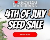 Buy 10 Get 10 Free On Selected Premium Cannabis Seeds