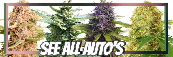 Get The Latest Deals On Autoflowering Seeds