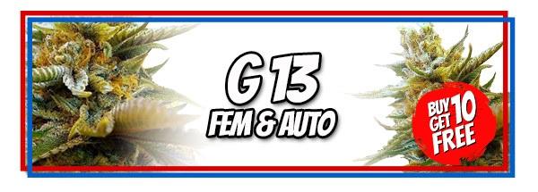 G13 Marijuana Seeds Available in Feminized And Autoflowering Packs
