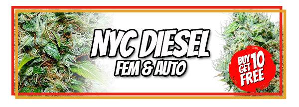 NYC Diesel 710 Cannabis Seeds Offer