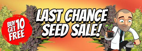 Autoflowering Seeds End Of Season Sale
