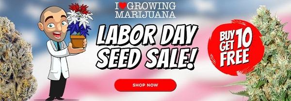Labor Day Sale With Free Marijuana and Cannabis Seeds