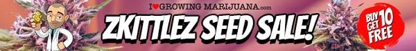 Zkittlez Marijuana Seeds Sale - Get Your Free Cannabis Seeds Today