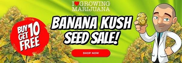 Buy 10 Get 10 Free Banana Kush Seeds